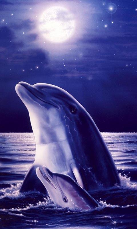Dolphins Live Wallpaper   screenshot 480x800