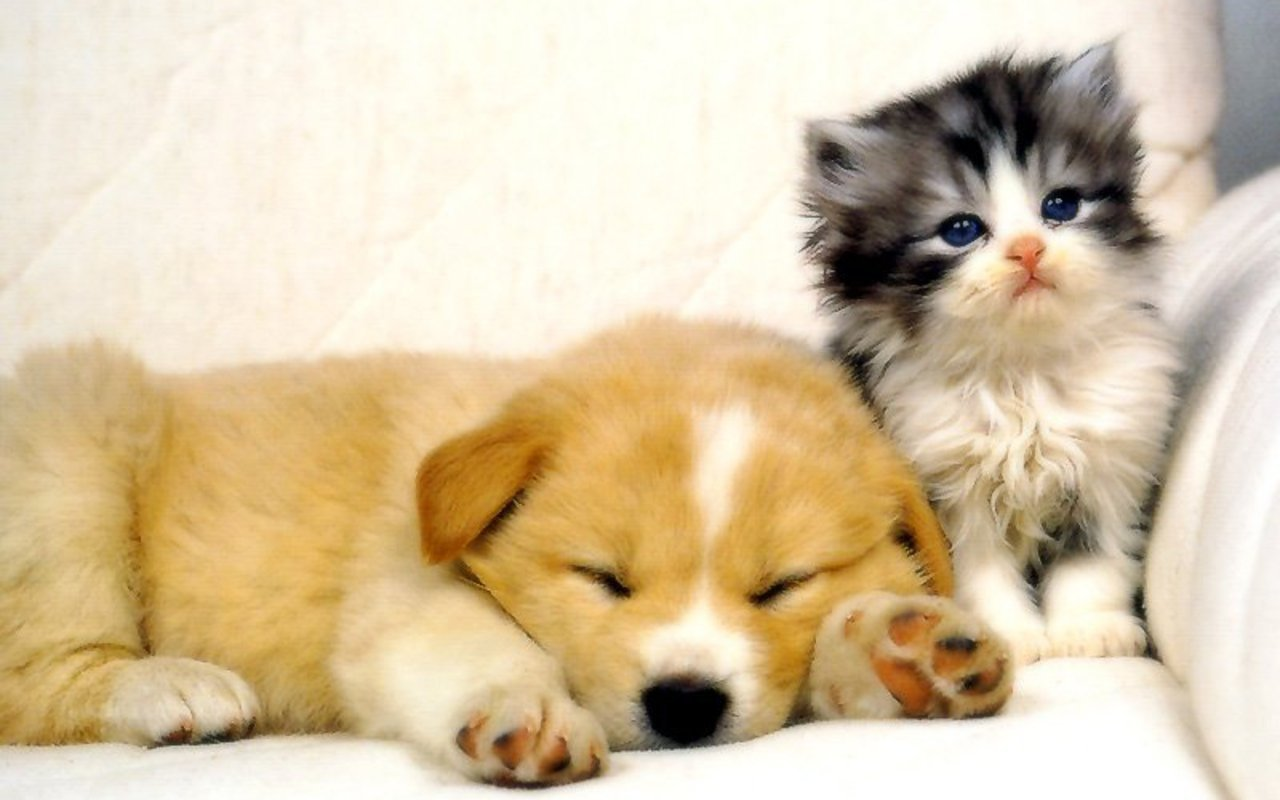 My Top Collection Dog and cat wallpapers 4 1280x800