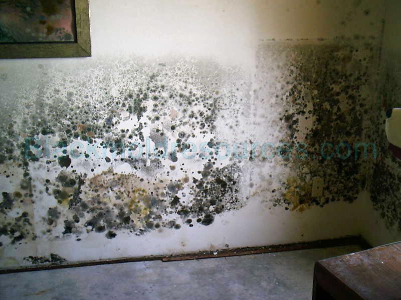 Is Mold Behind Wallpaper Dangerous Wallpapersafari