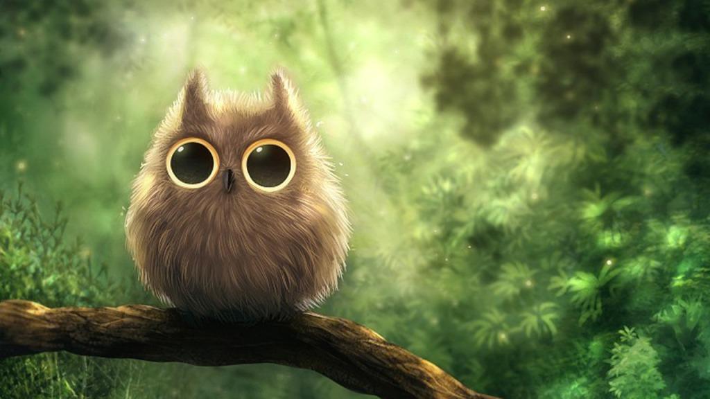 Baby Owl Desktop Background