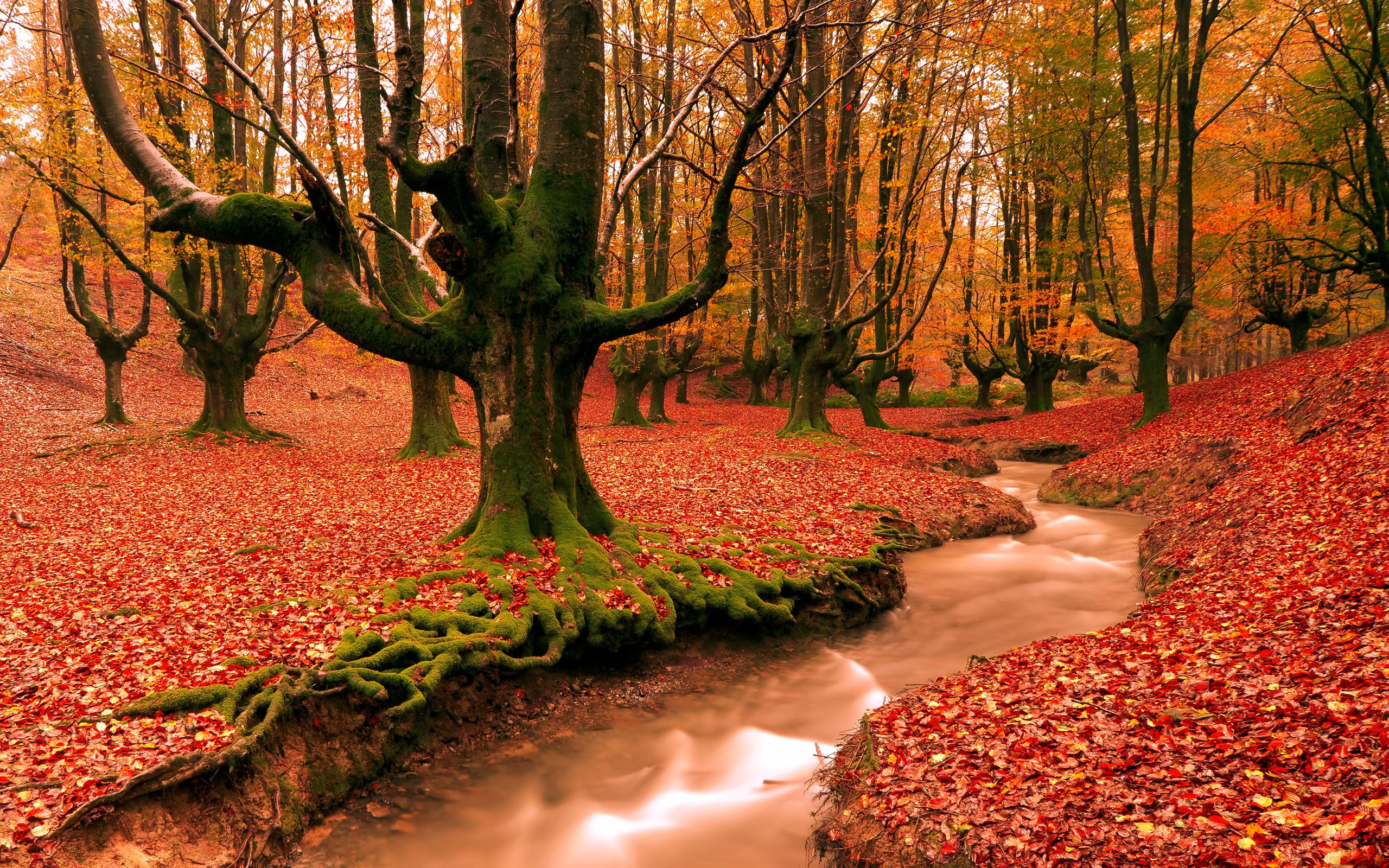 images of autumn desktop wallpapers free on latoro wallpaperhtml 2560x1600