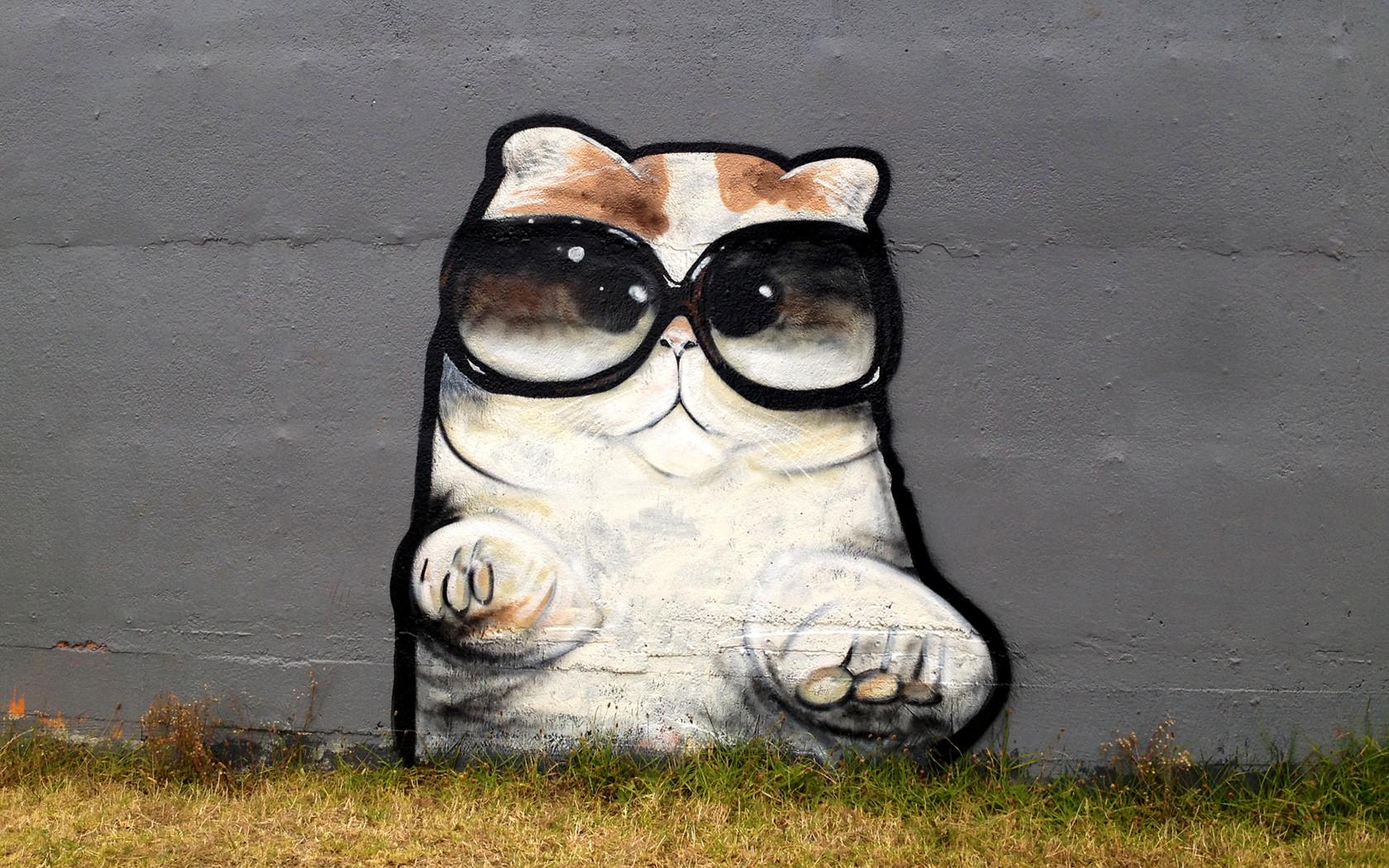 graffiti kitten with big glasses sprayed on wall stencil cats 1680x1050