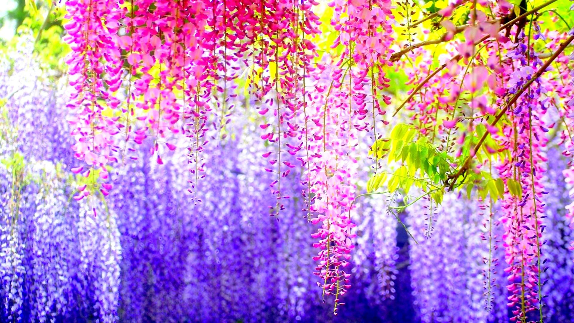 Pretty Flowers 1920x1080