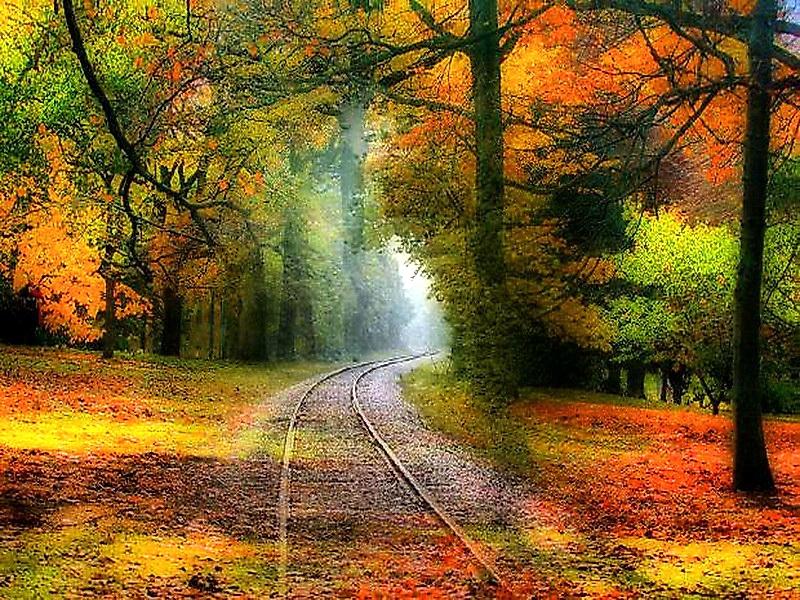 wwwwallpaperhicomNatureForestsautumn colors Autumn rails 22522 800x600
