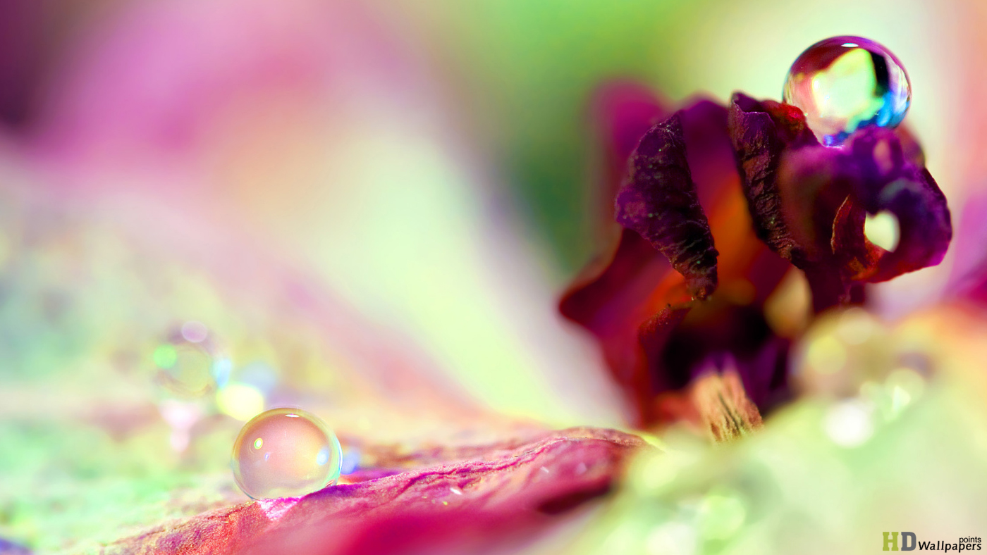 Spring Colorful HD Design for Background Wallpaper 1400x788
