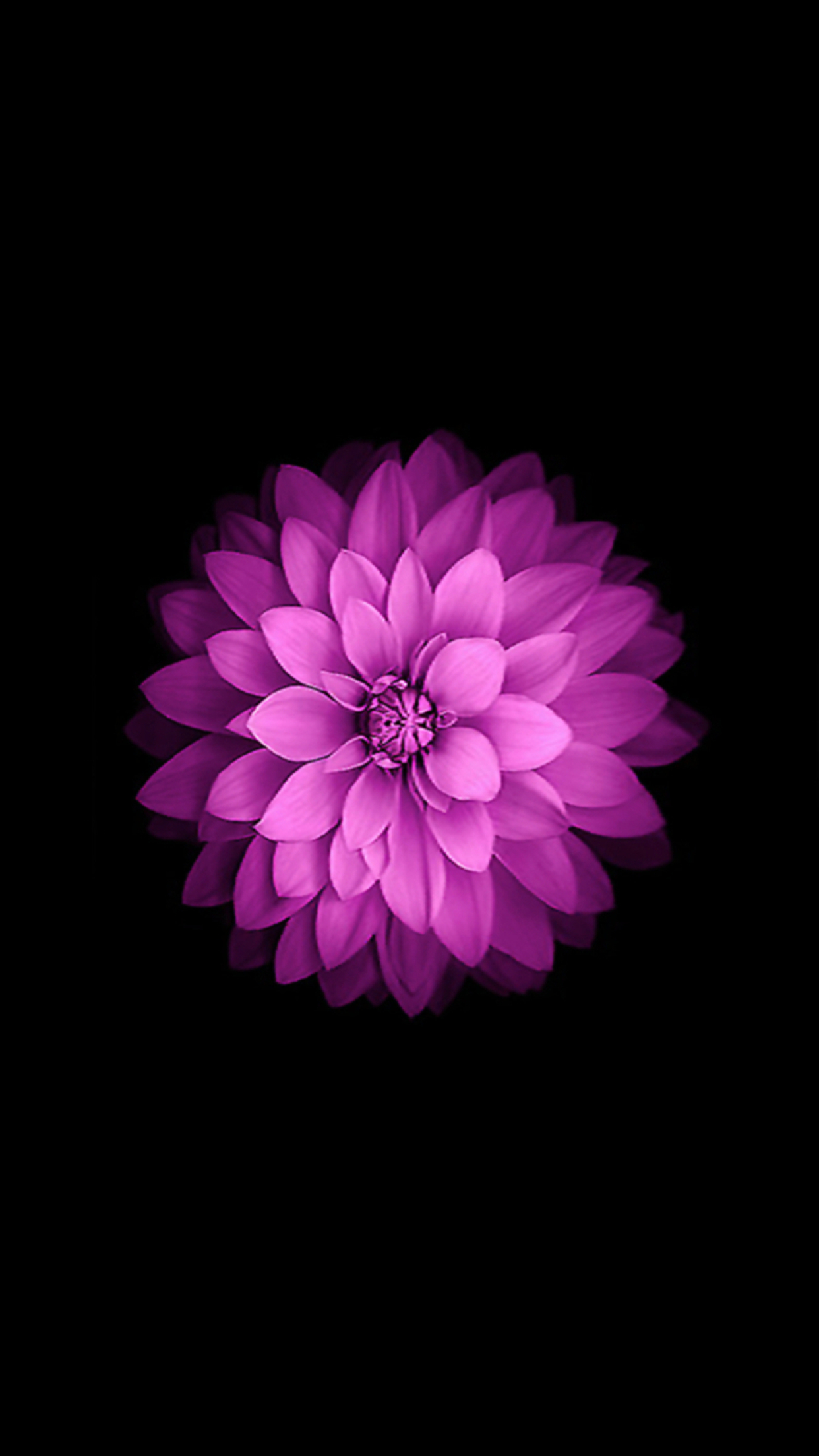 Top Wallpaper Iphone 7 Flowers Electro Sphere
