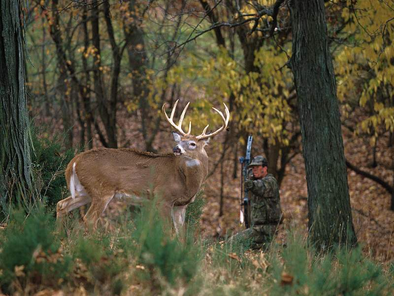 hunting wallpaper hd 2 751518jpg 800x600