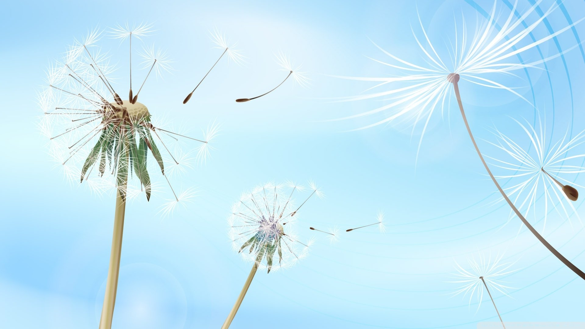 Blowing Dandelions Wallpaper 1920x1080 Blowing, Dandelions