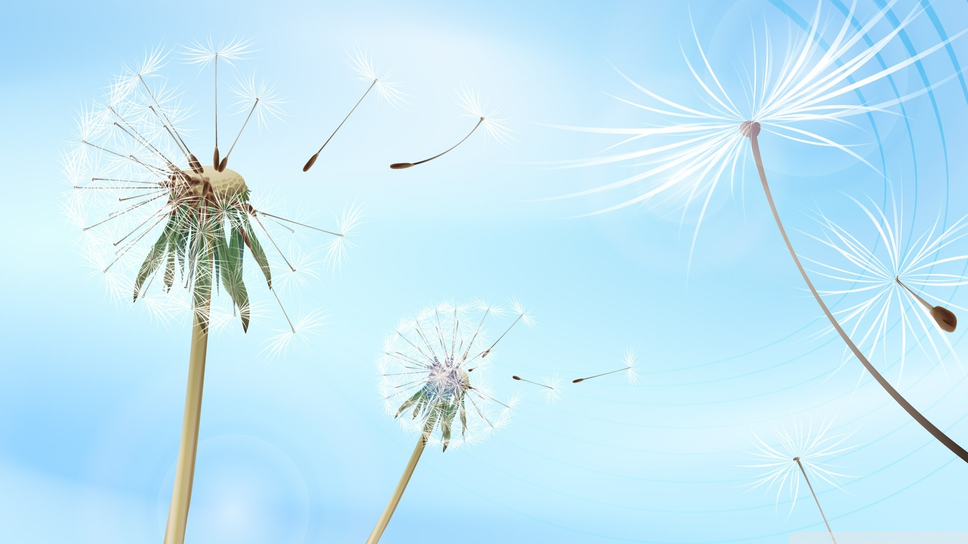Blowing Dandelions Wallpaper 1920x1080 Blowing Dandelions 1920x1080