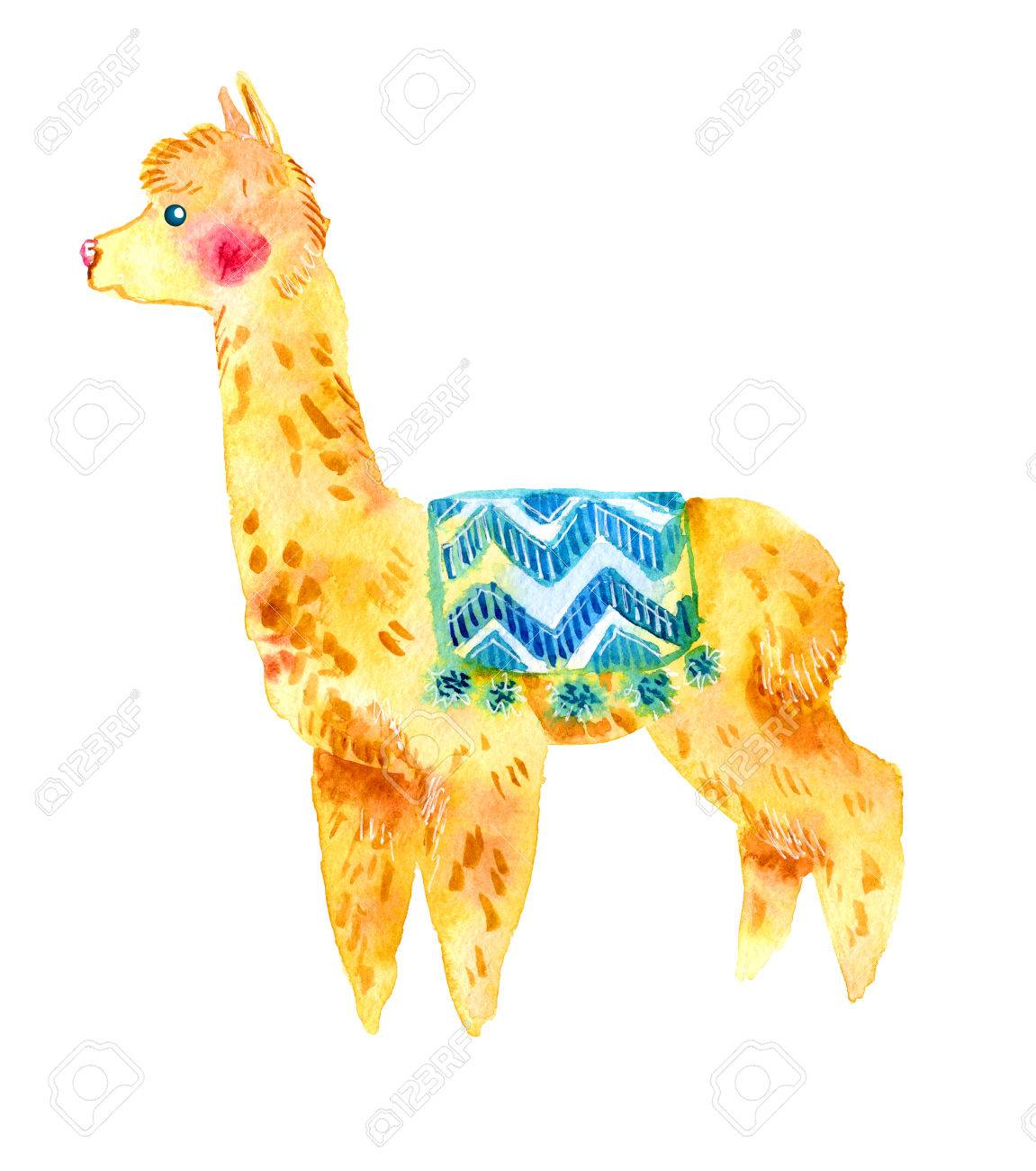 Watercolor Llama Alpaca Isolated On White Background Stock Photo 1151x1300