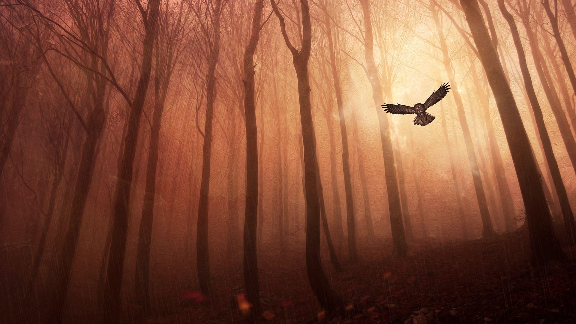 Owl flying in the rain wallpaper 17949 1920x1080