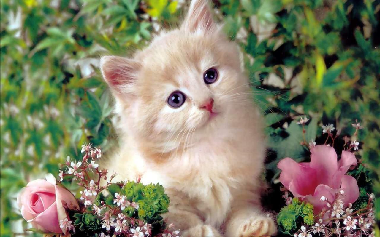 Cute Kitten Kittens Wallpaper