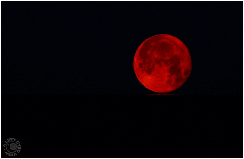 Free Download Red Moon Plant Nature Photos A Left Eyed View 800x521 For Your Desktop Mobile Tablet Explore 71 Red Moon Wallpaper Blood Red Wallpaper Blood Moon Wallpaper Blood Adds the bloodmoon event from terraria to minecraft. free download red moon plant nature