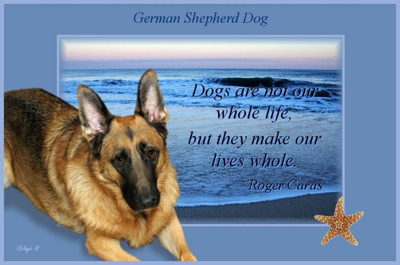 German Shepherd Puppies HD Wallpapers Pictures Backgrounds for kids 792x525