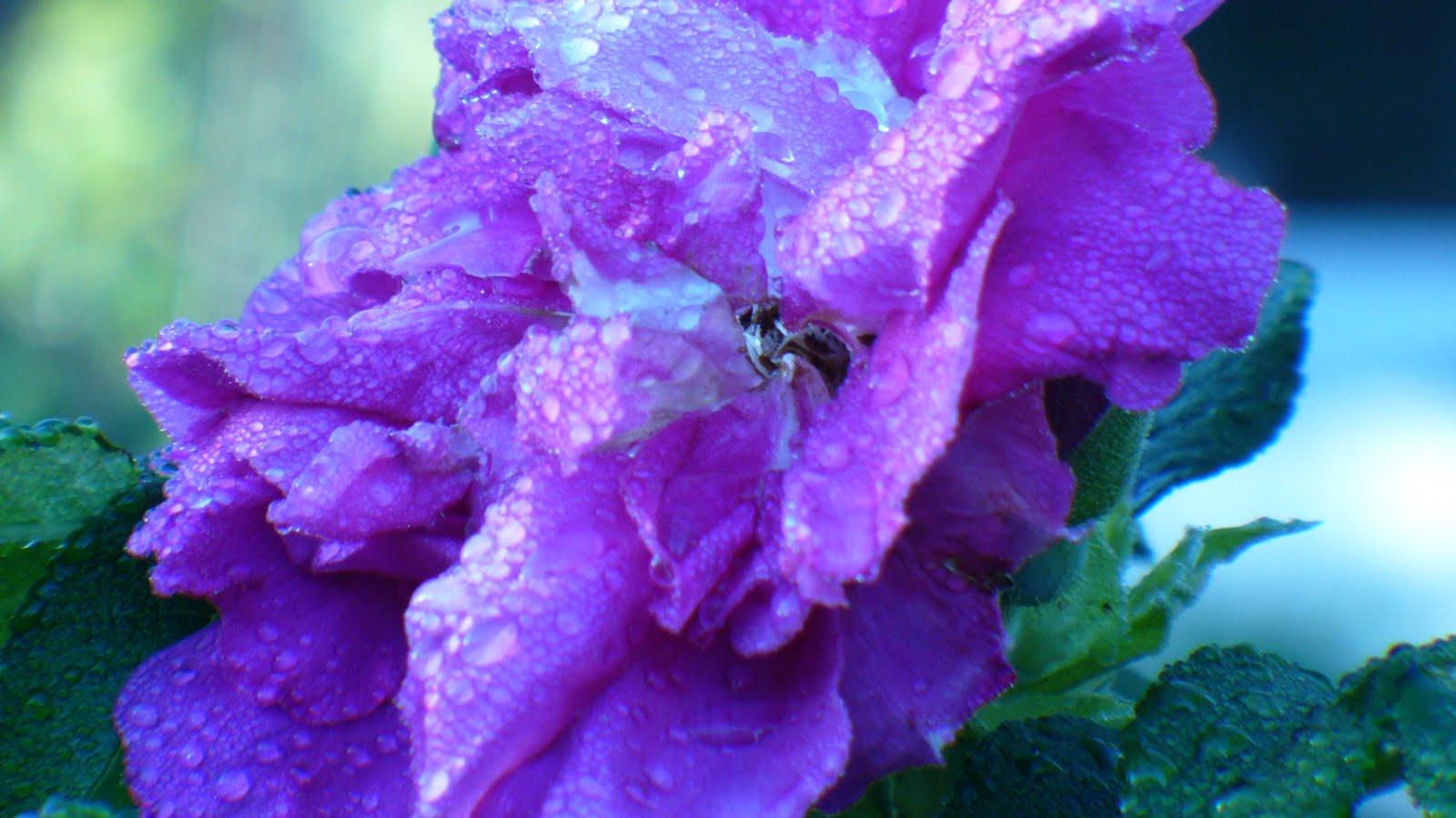 purple flowers wallpaper purple flowers wallpaper purple flowers 1600x900