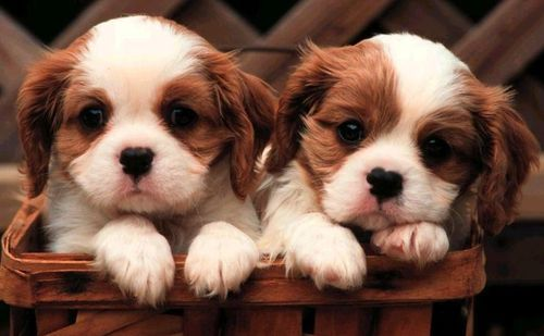 cute dog pictures dogs pictures cute cute dog images cute puppy 500x309