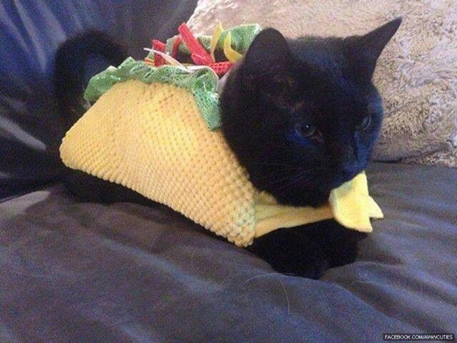 Taco cat For Brooke Baird Baird Lowater and Christina Childress 640x480