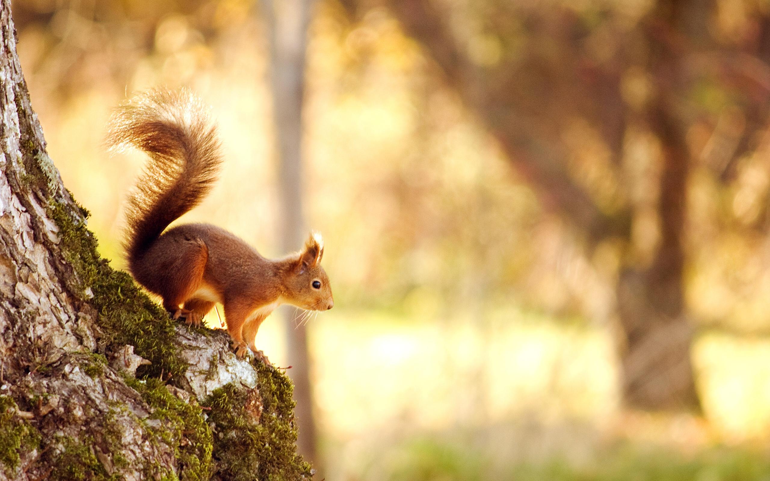 Latest Squirrel HD Desktop Wallpaper HD Wallpaper 2560x1600