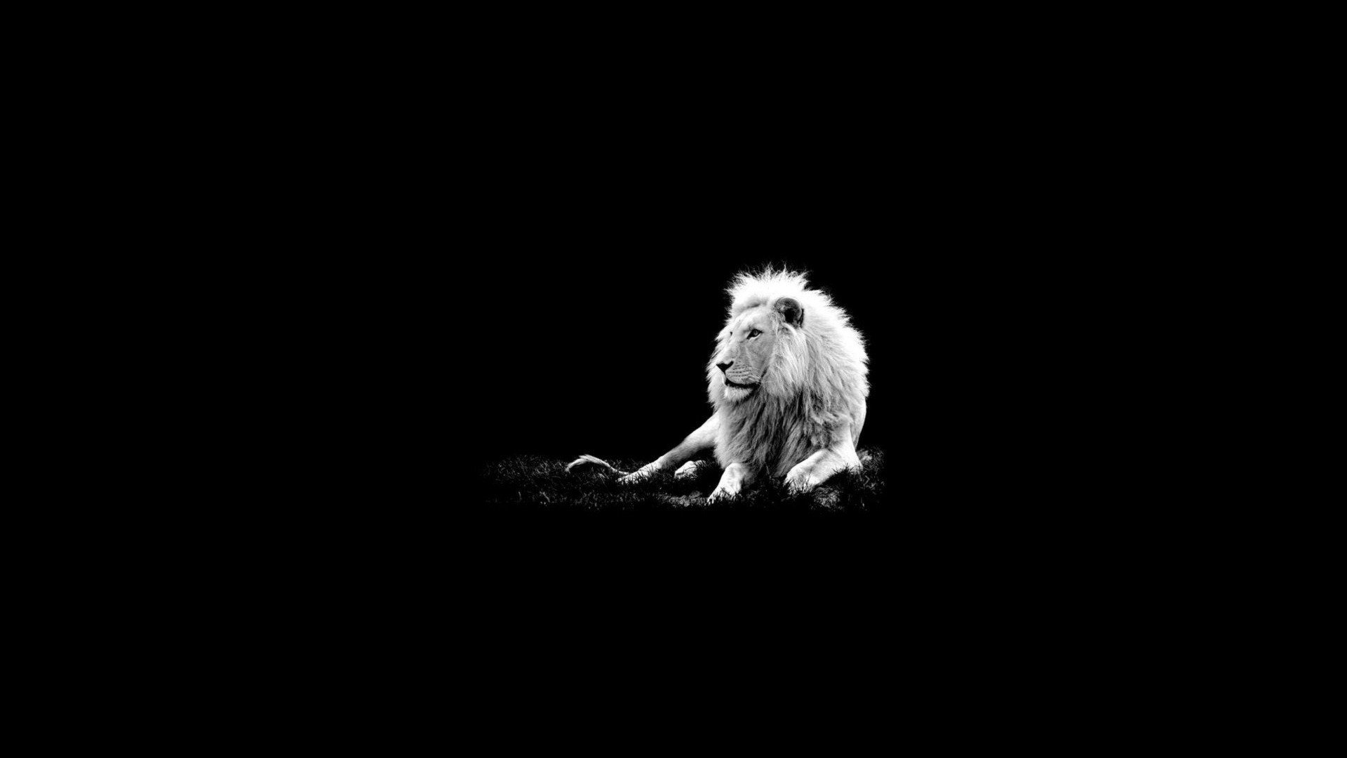 Black Art Dark Lion Wallpaper Desktop 174 Free Download Gamefree