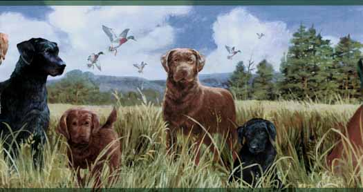 Labradors in a Field Wallpaper Border   Wallpaper Border Wallpaper 525x278