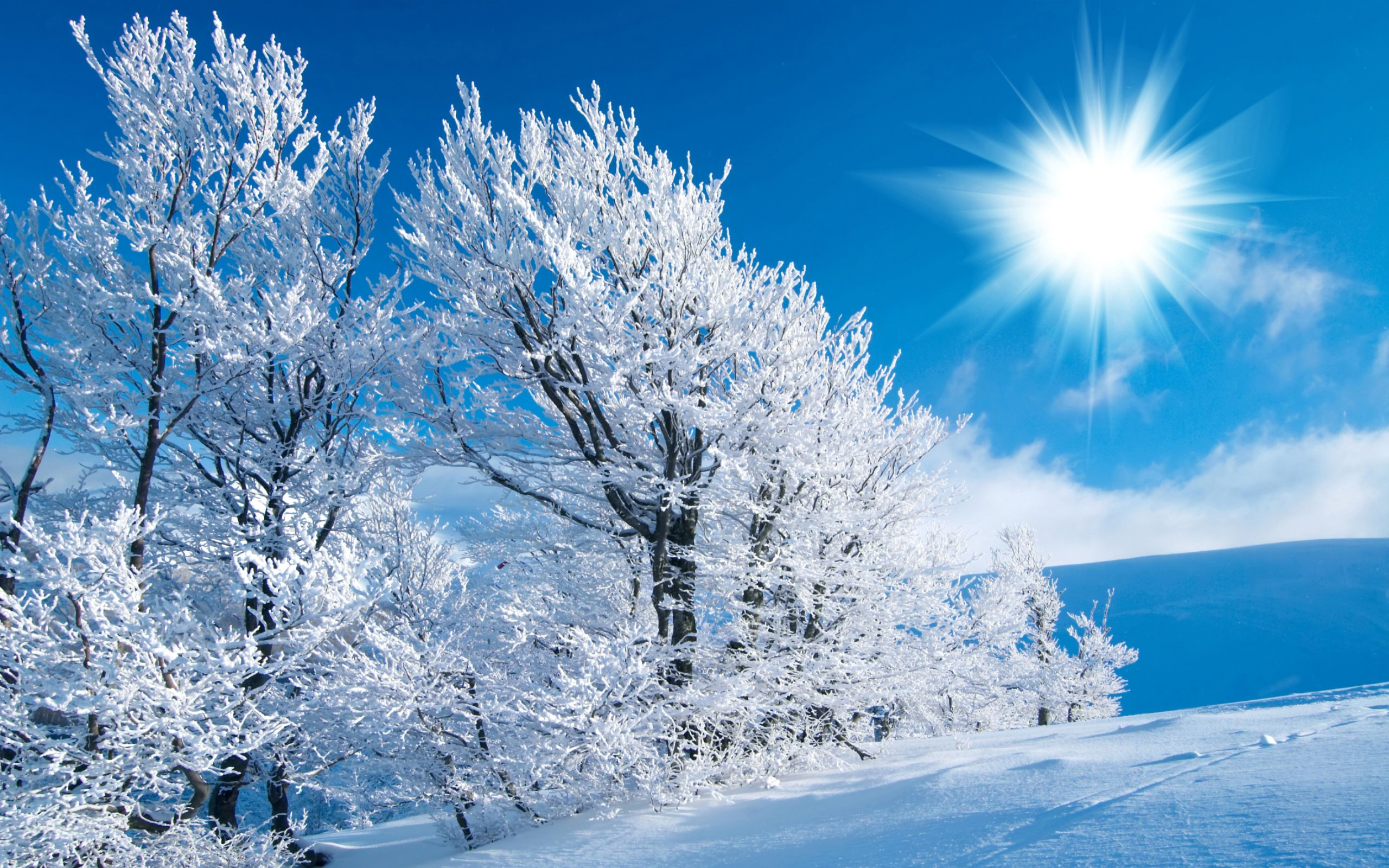 Winter Scenes HD Wallpaper 2560x1600