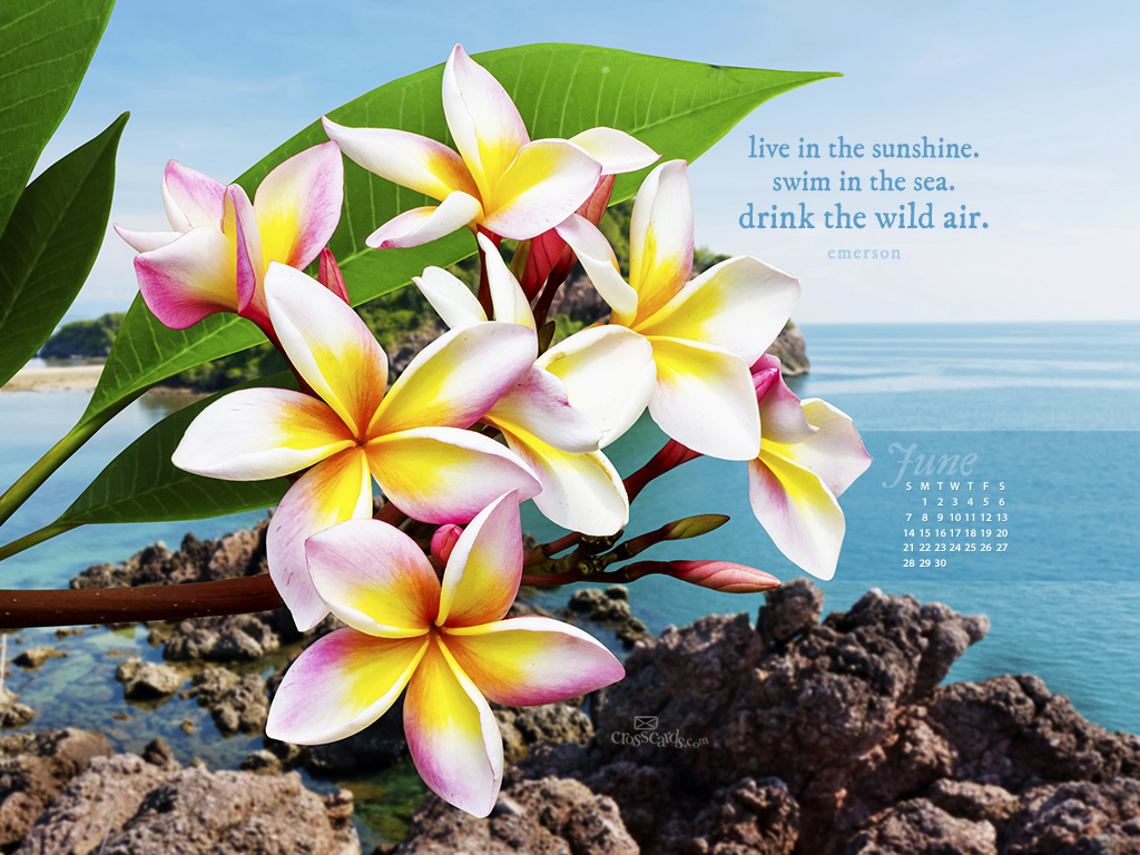 June 2015   Live In Sunshine Desktop Calendar  Monthly Calendars 1024x768