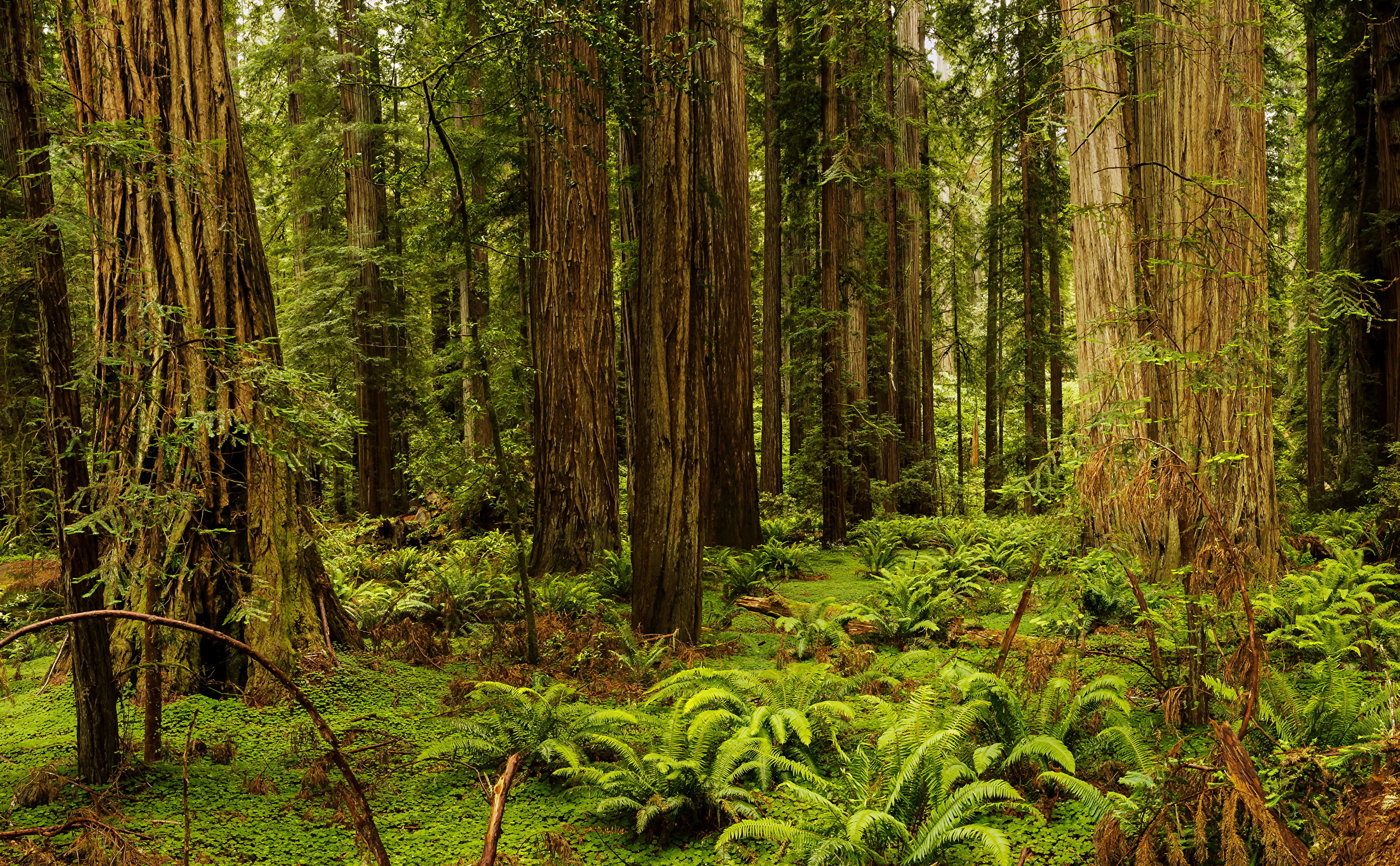Images California USA Redwood National And State Parks 2560x1584 2560x1584