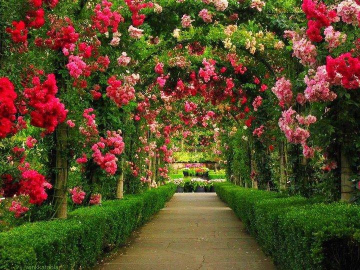 Beautiful Rose Garden Wallpaper delighful beautiful rose garden wallpaper in inspiration decorating