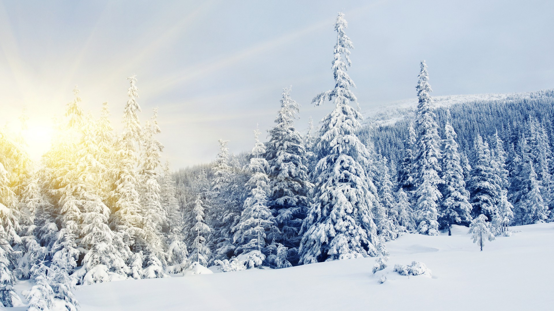 Winter snow covered trees wallpapers and images   wallpapers pictures 1920x1080