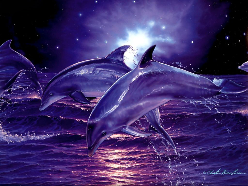 Free Download 3d Digital Dolphins Hd Wallpaper High Quality