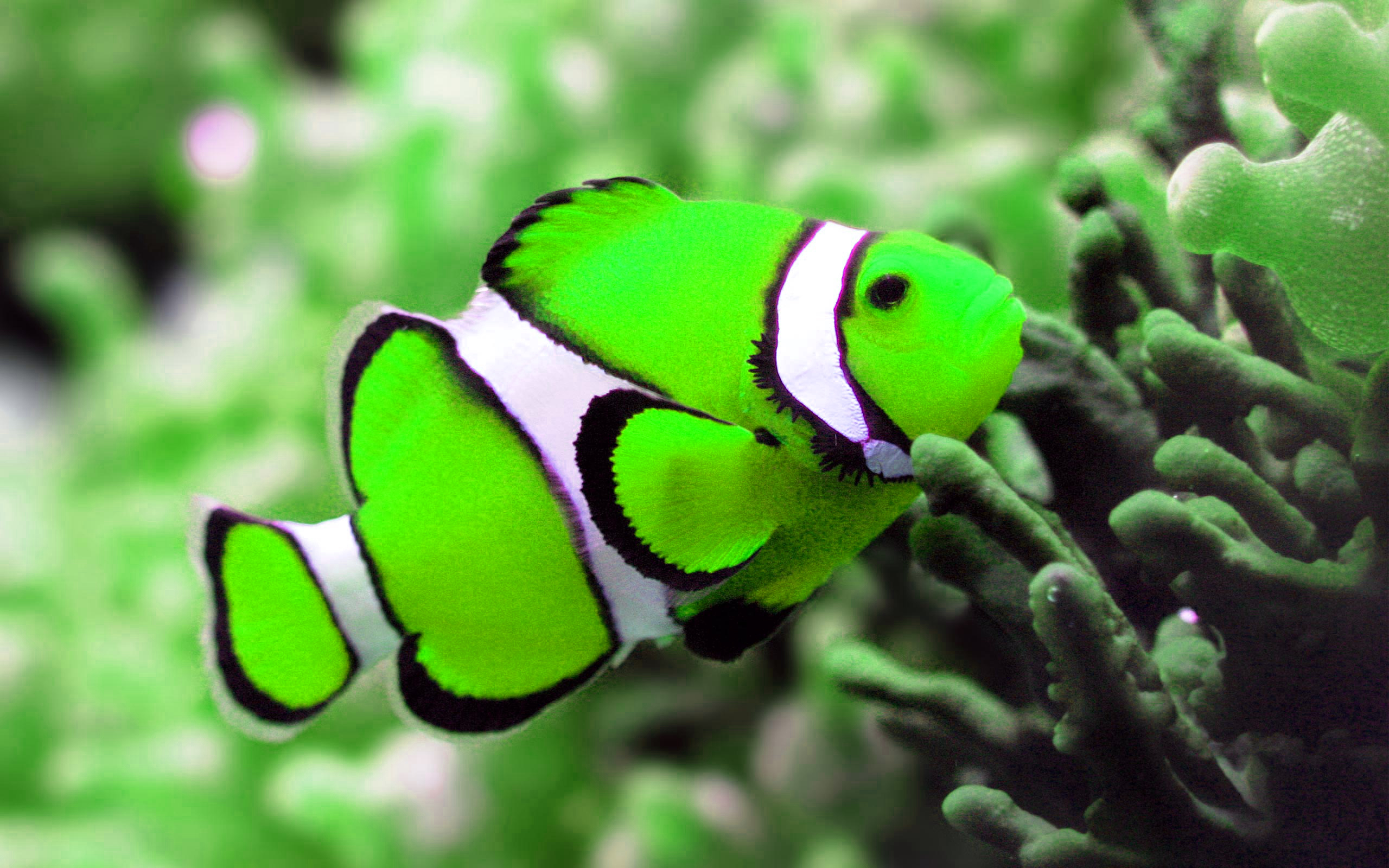 Pin Background Colorful Fish Underwater Wallpaper 26151 2560x1600