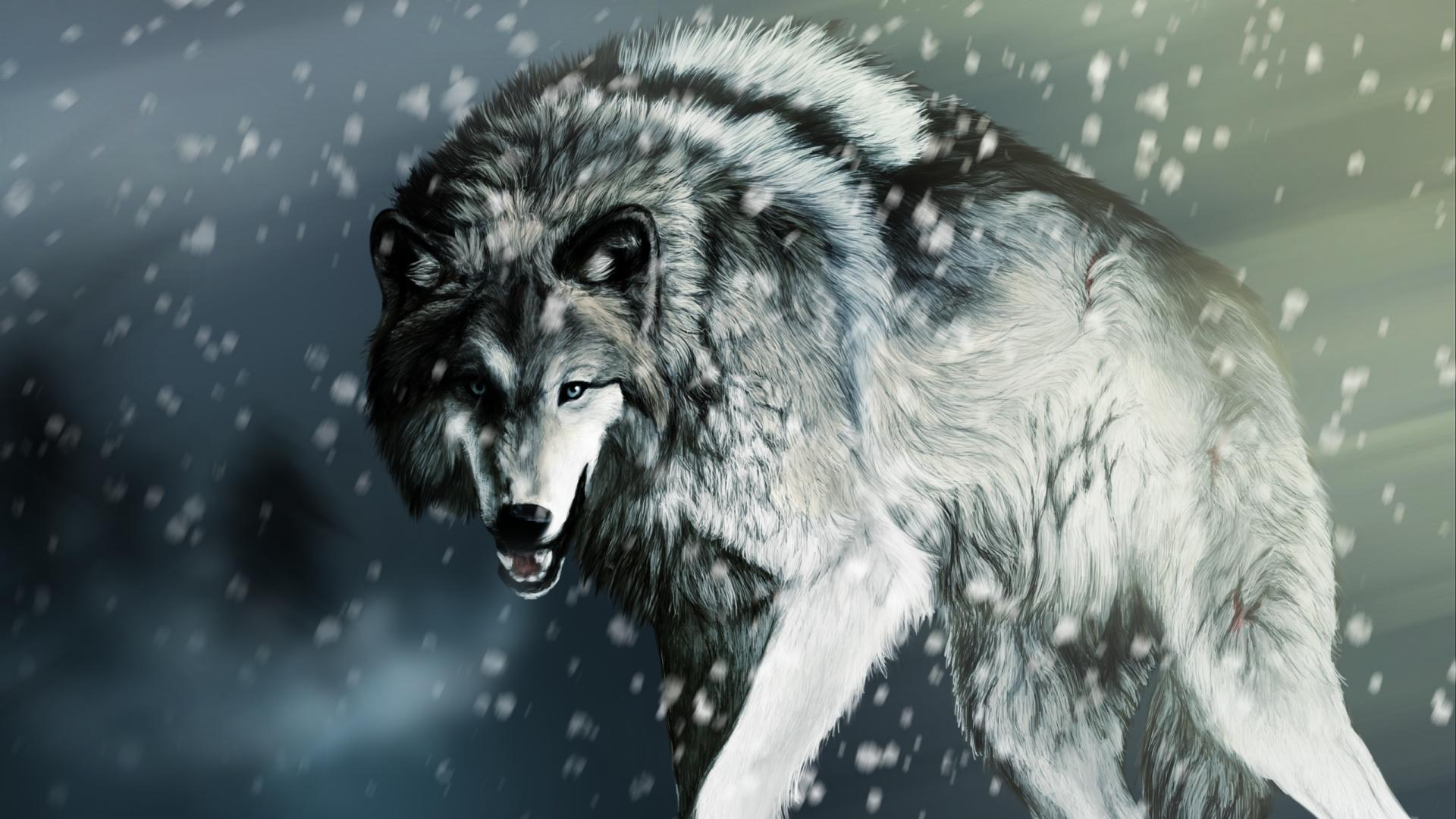 Cool Wolf Backgrounds 1920x1080