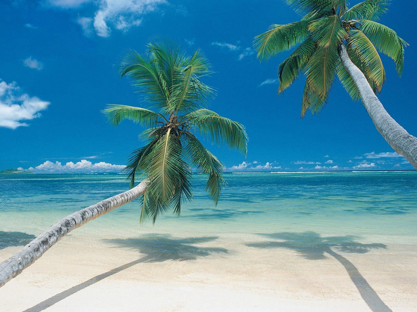 URL httpwwwsmscscomphotobeautiful palm tree wallpaper10html 1400x1050
