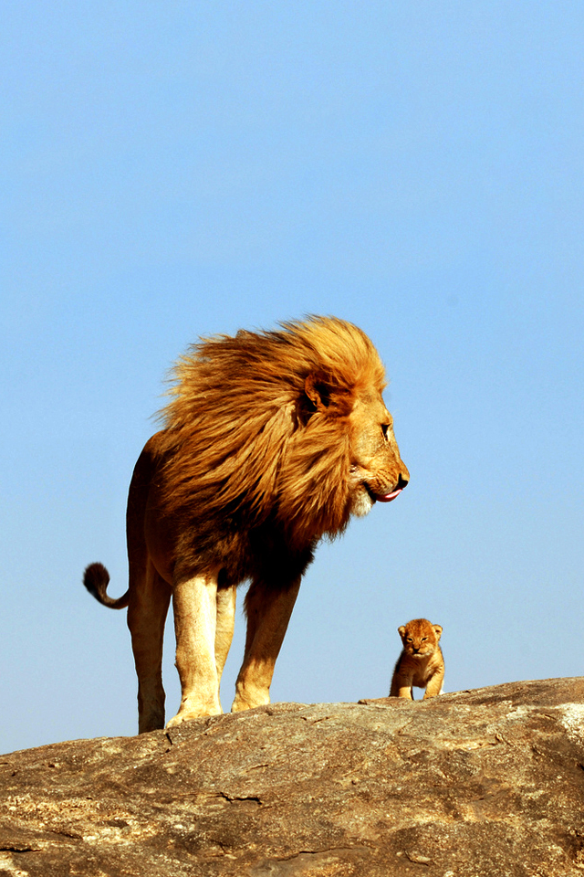 Lion King iPhone 4s Wallpaper Download iPhone Wallpapers iPad 640x960