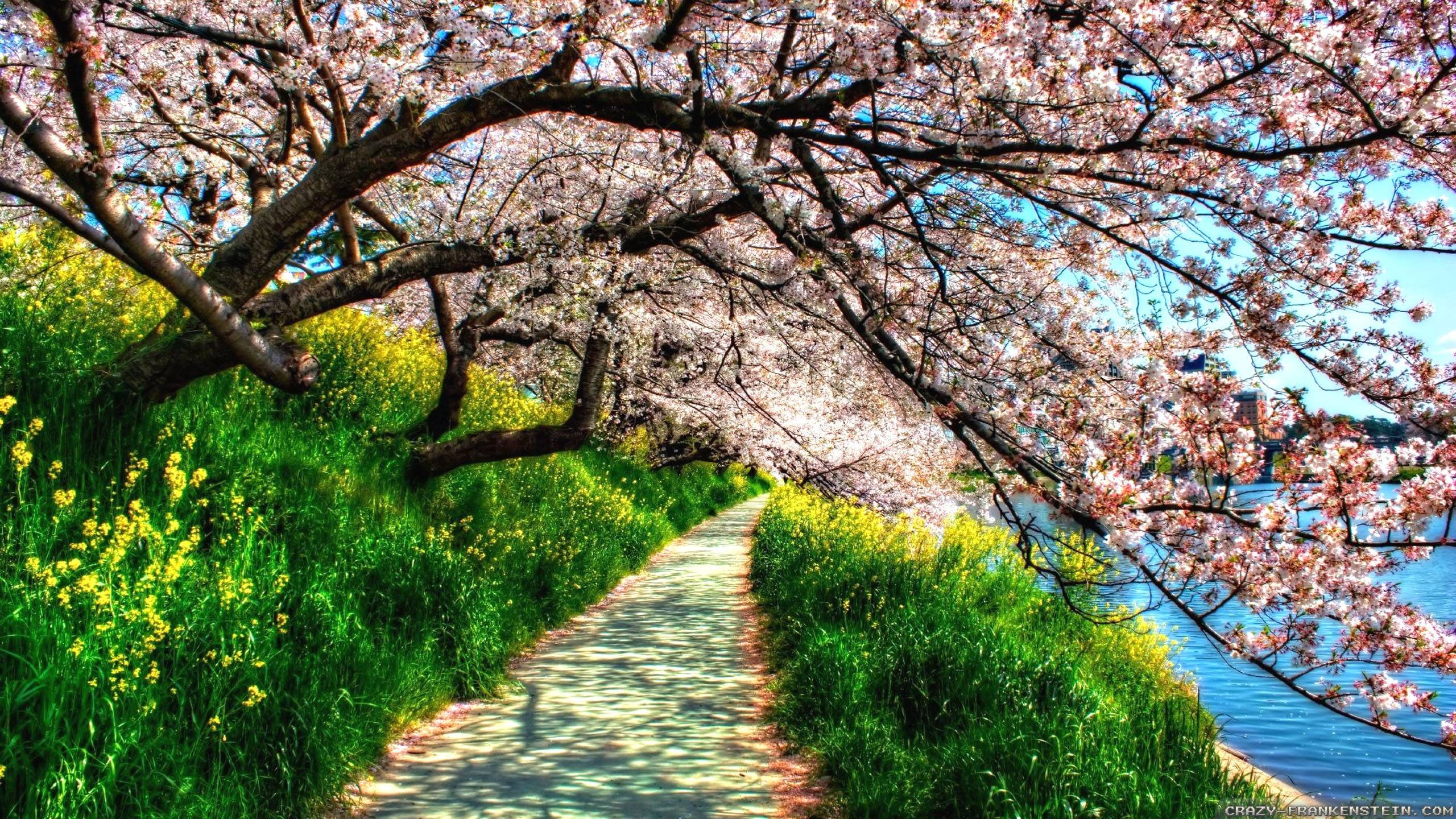 Spring Nature Wallpapers   Top Spring Nature Backgrounds 2560x1440