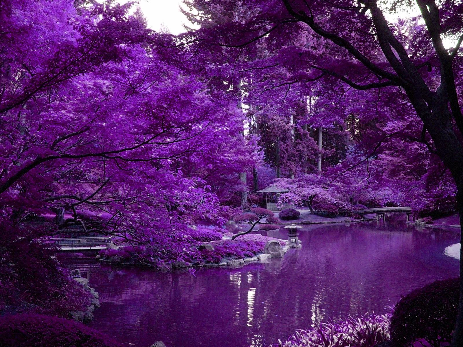 Thread Purple Scenery With Zen Pond In Japanese Garden 1600x1200