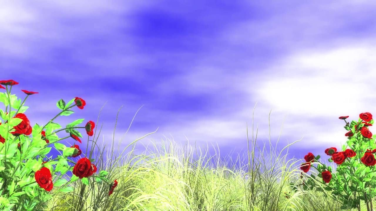 Best background images hd 1080p download   Download Hd 1280x720