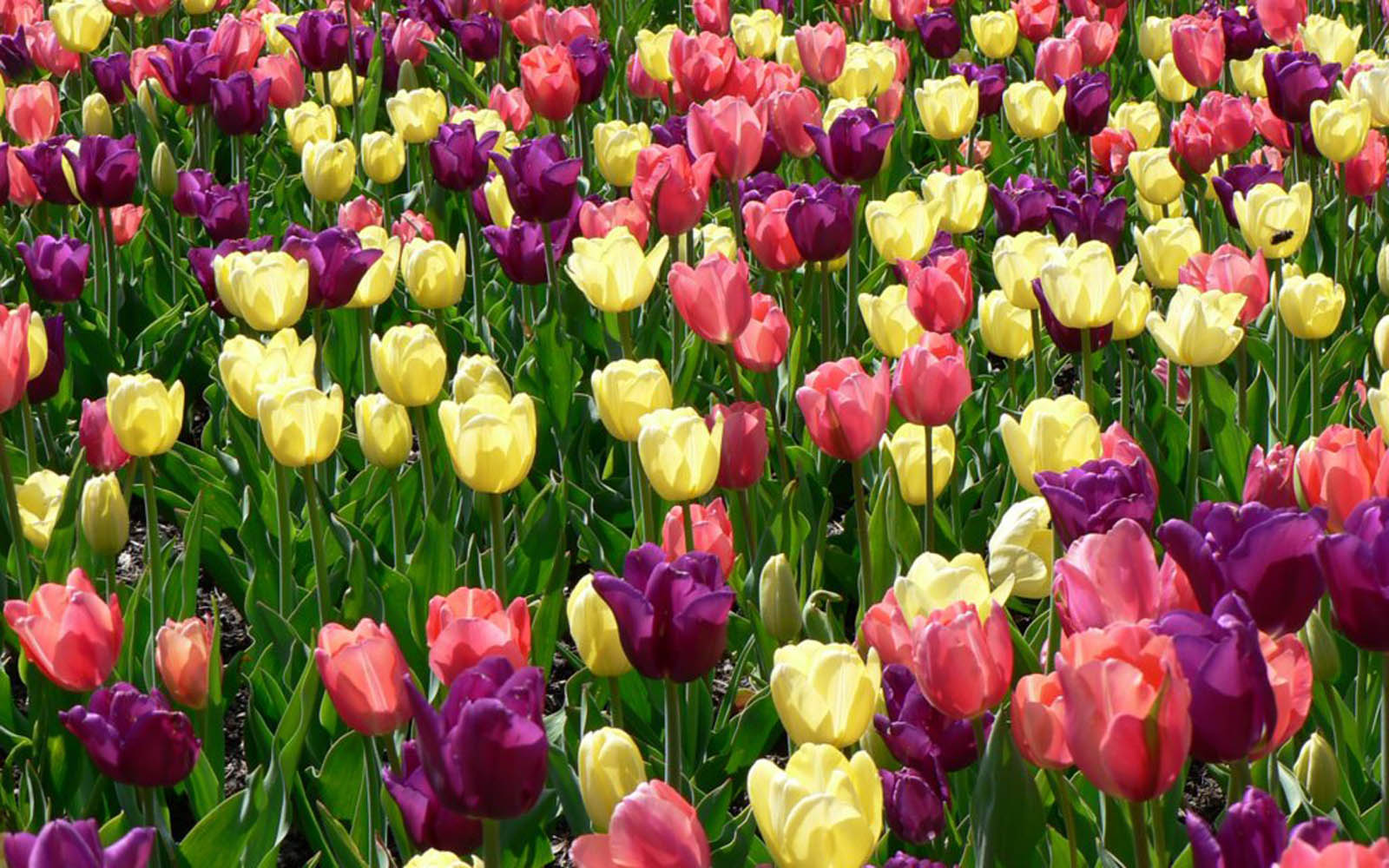 Flowers Wallpapers Images Photos Pictures and Backgrounds for 1600x1000