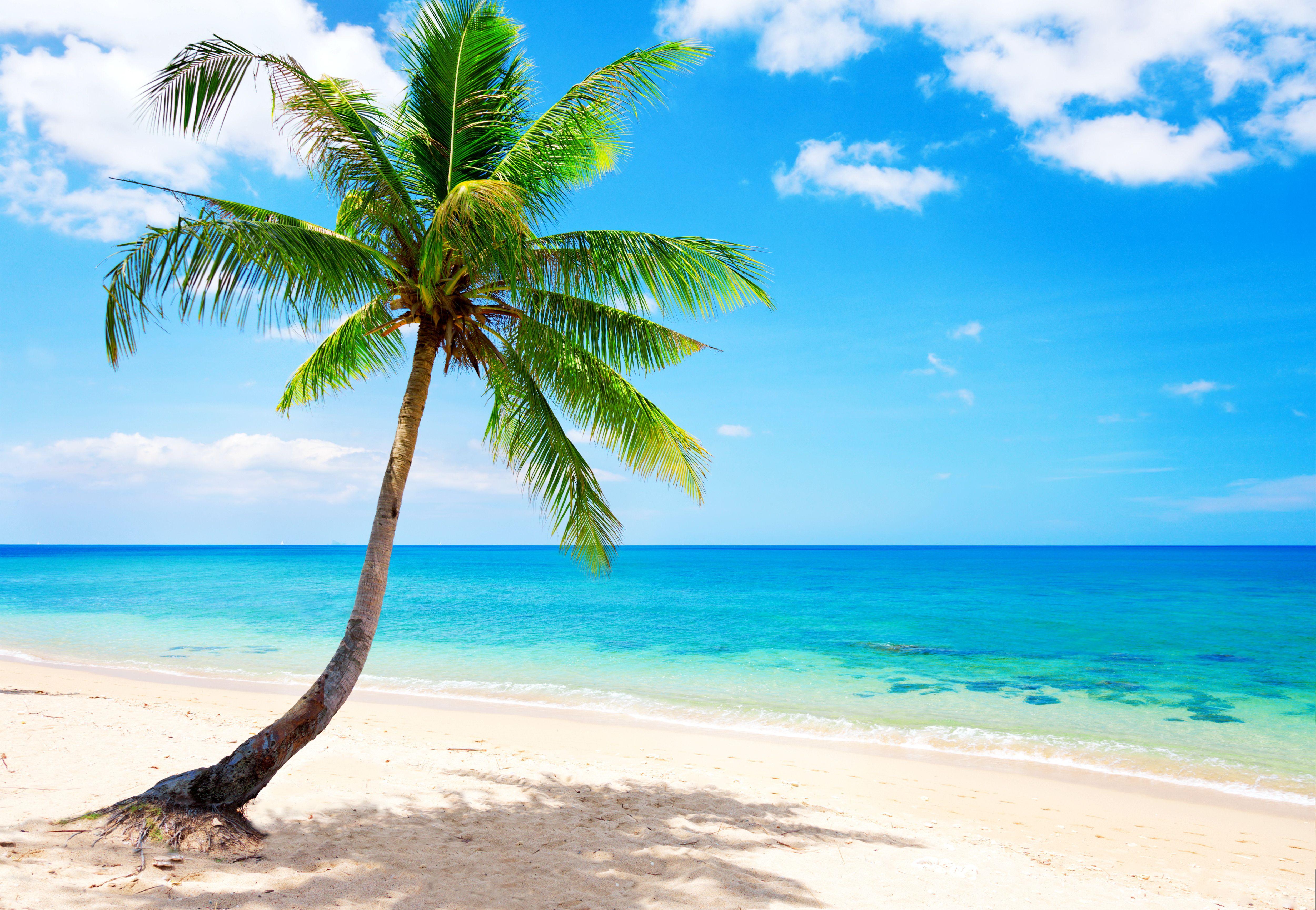 Tropical Beach Wallpaper Desktop Background Nature HD Wallpaper 5000x3456