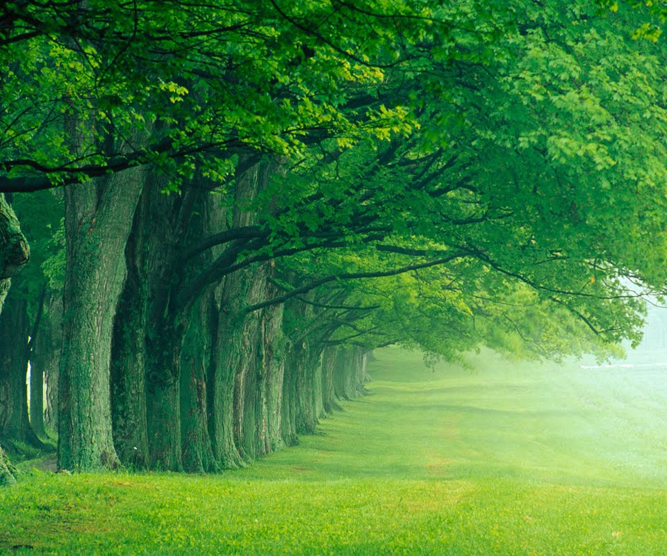 beautiful high definition nature wallpaper for all tablet pc 960x800