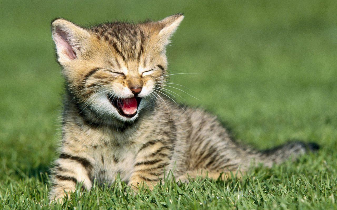 Cute Kitten   Kittens Wallpaper 16123158 1280x800