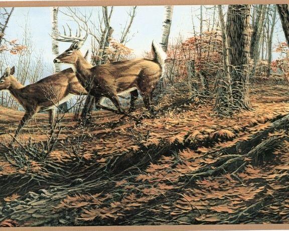 Autumn Deer Wallpaper Border Cabin Lodge Wildlife Hunting Sale eBay 576x460