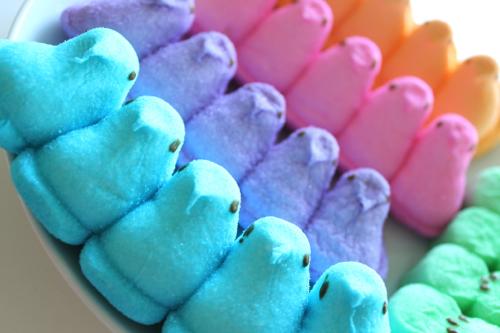 Peeps Bunny Wallpaper Bunny and chick peeps cupcakesjpg 500x333