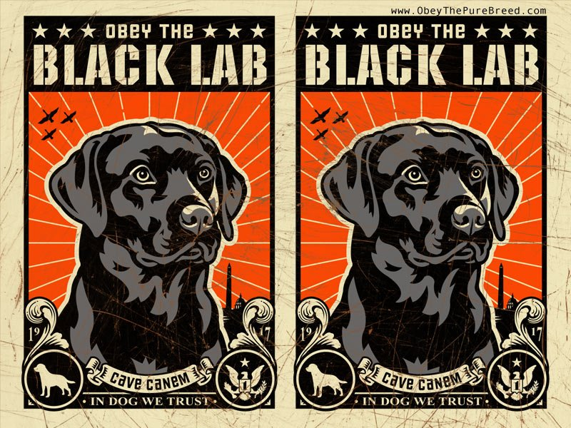 Spread Propaganda for the Labrador Retriever Revolution 800x600