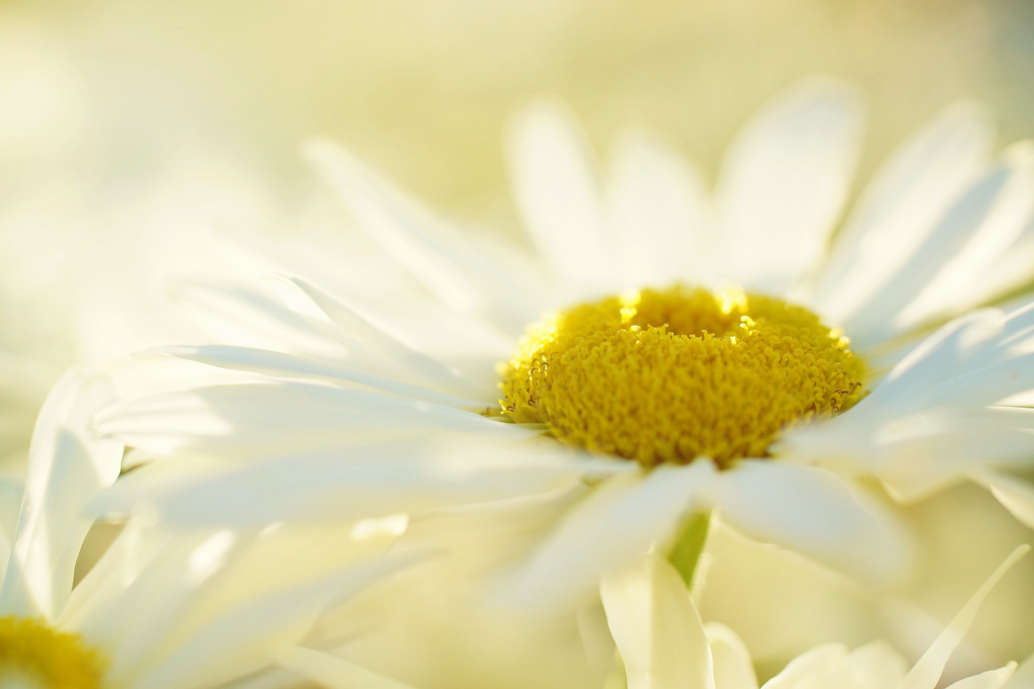 white daisy flowers yellow butterfly blue sky desktop wallpapers and 2048x1365