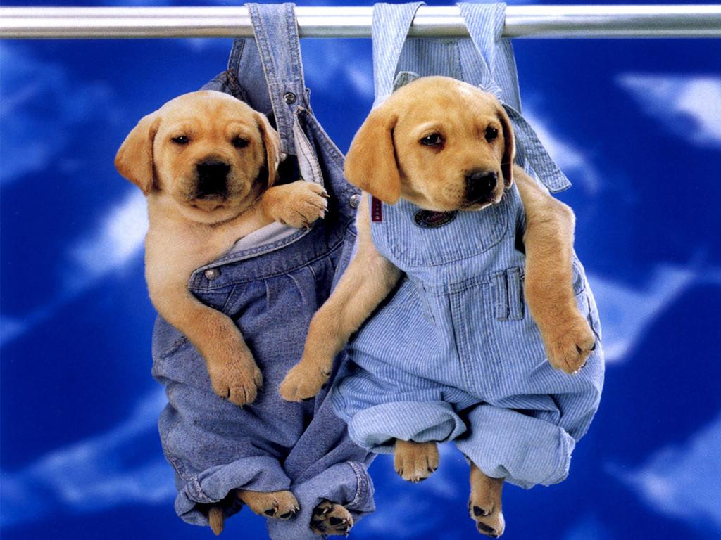 Cute Puppy Dogs Wallpaper   HVGJ 1024x768