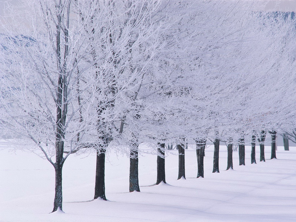 Winter wallpaper snow tree lined Urban Art Wallpaper 1024x768
