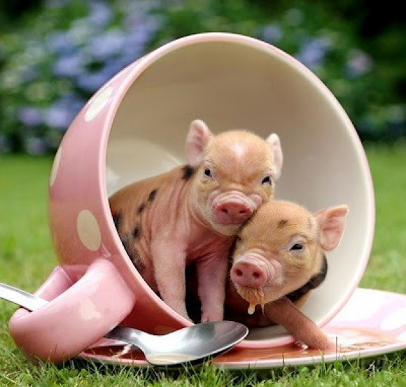 50 Incredibly Cute Baby Animal Pictures around the World Abduzeedo 580x553