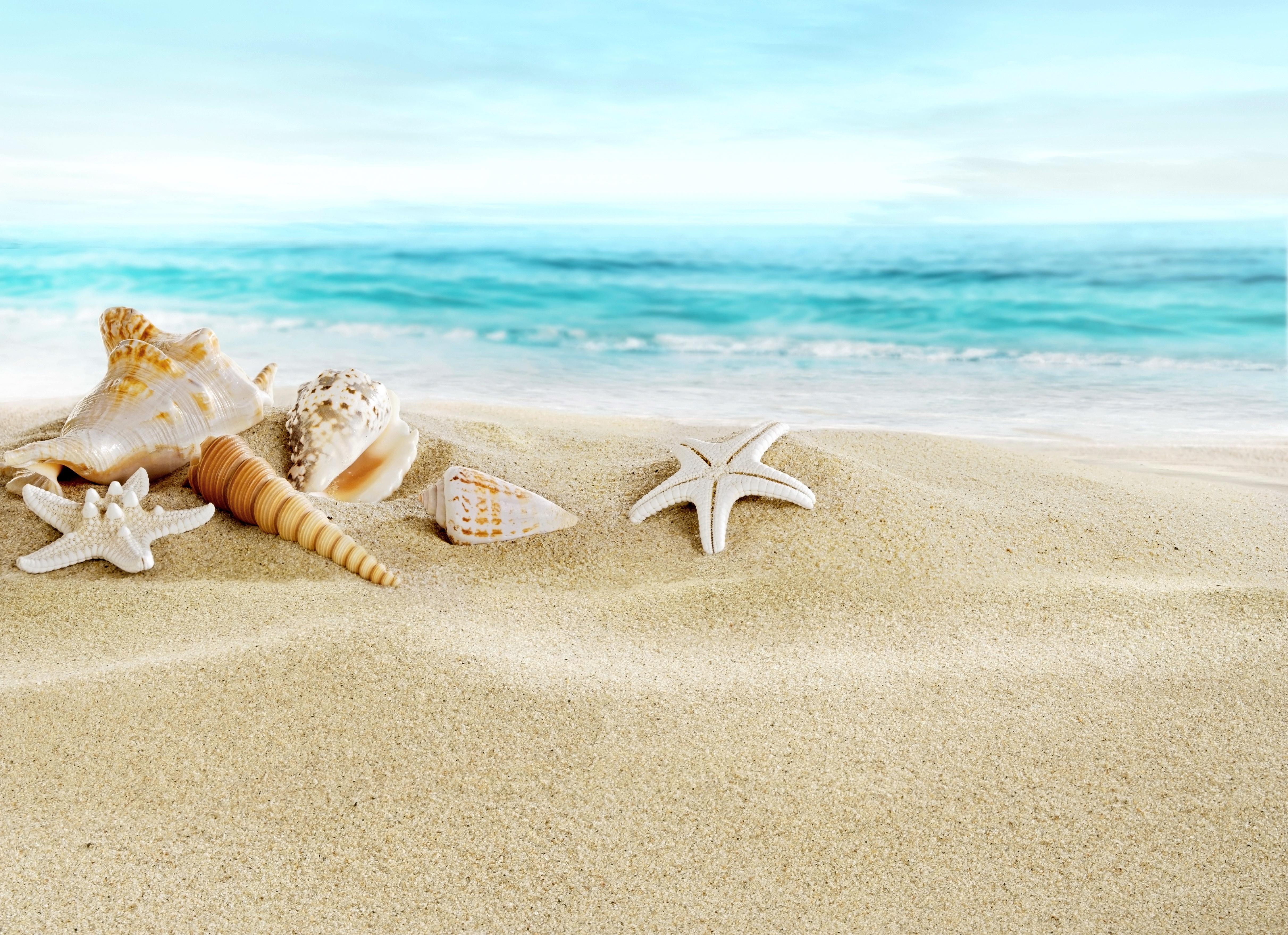 природа ракушка песок nature shell sand  № 1246811 бесплатно