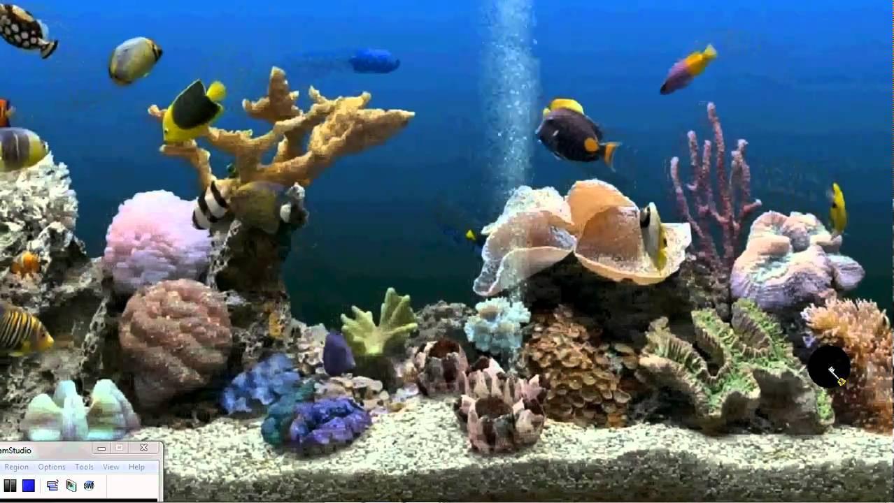 How to get an Aquarium as your Desktop Background Xp Vista 1278x720